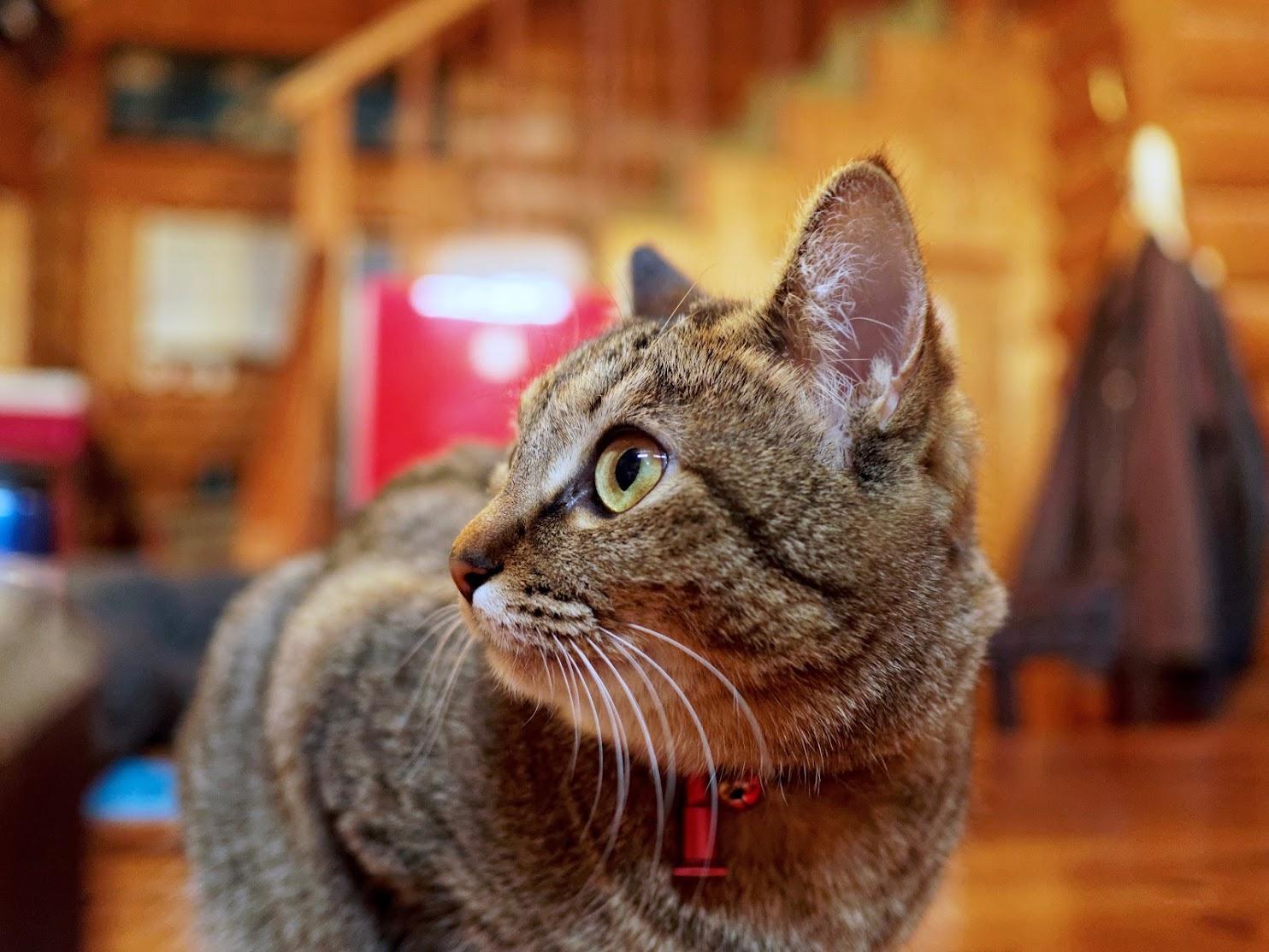 Cat ISON