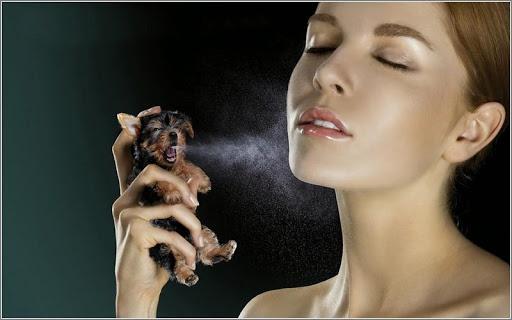 Tips Memakai Parfum