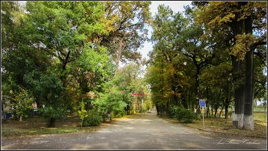 Photo: Arborele pagodelor (Ginkgo biloba) - din Parcul Tineretului - 2016.10.24