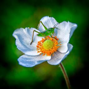 by Steel Hero - Flowers Flowers in the Wild