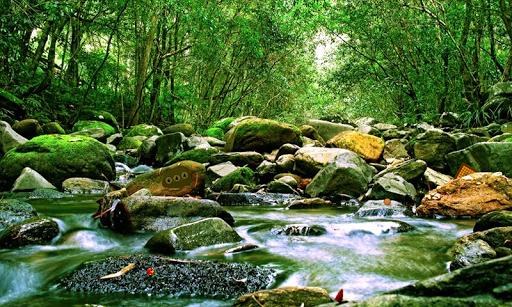 アマゾン森林エスケープ2