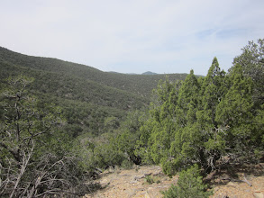 Photo: Nice forest down here in the Cibola