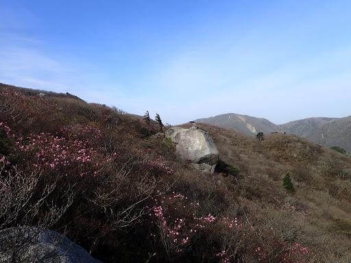 アカヤシオとキノコ岩
