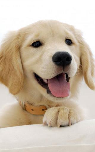 Puppies Live Wallpaper 22.0 screenshots 2