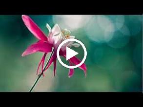 Video: A. Vivaldi  RV 427   Concerto for flute, strings   b.c. in D major   Academia Montis Regalis -