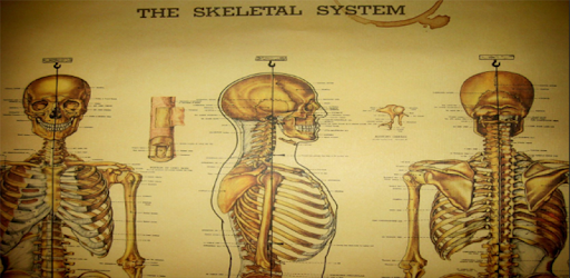 Anatomie-Skelett: Skelettsystem – Apps bei Google Play