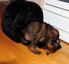 Photo: Flekken og største gutten kjemper om senga
