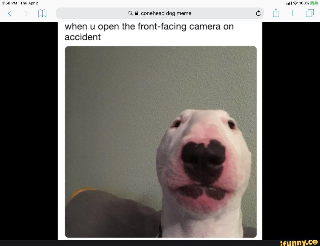 Q A conehead dog meme when u open the front-facing camera on accident -  iFunny :)   Dog memes, Memes, Dogs