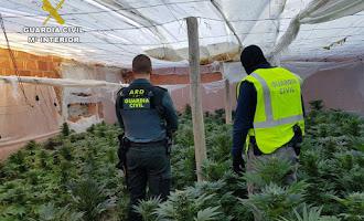 Operaciones contra la marihuana en 2019