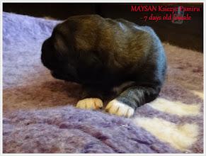 Photo: mała miała być Maysan, ale ostatecznie nadaliśmy jej imie MARUSHA Ksiezyc Pamiru ;)