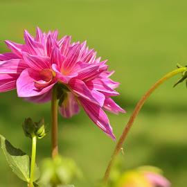 by Praveen Kulshreshtha - Flowers Flower Gardens (  )