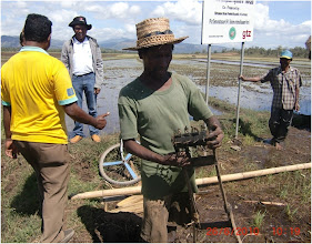 Photo: Wildred, a Timor Leste SRI farmer, holds a self-made weeder that cost around US$15 to make, 6/26/2010. [Photo Courtesy of Iswandi Anas]