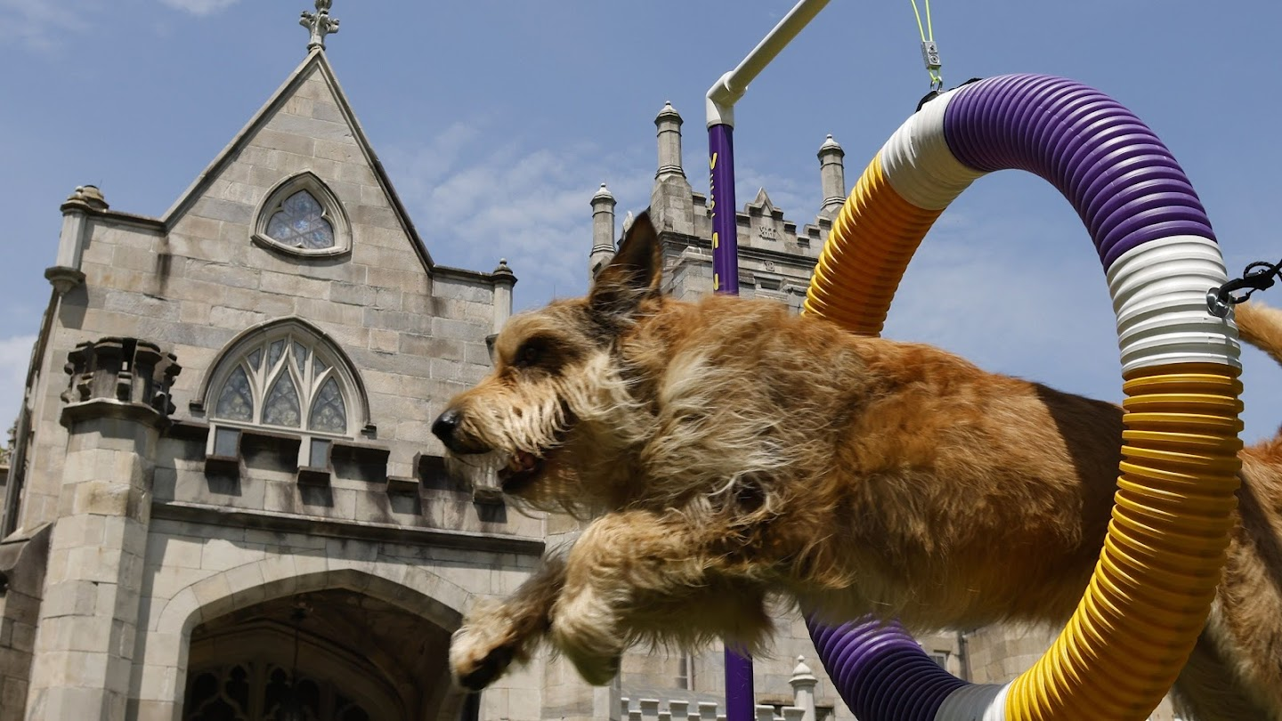 Watch Westminster Kennel Club Highlight Show live