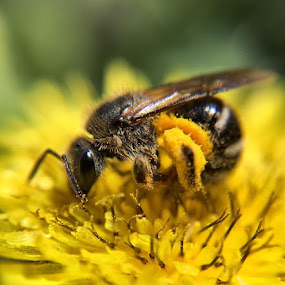 Pollination by Jillynn Markle - Uncategorized All Uncategorized (  )