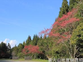 Photo: 拍攝地點: 梅峰-停車場 拍攝植物: 緋寒櫻 拍攝日期:2012_03_02_FY