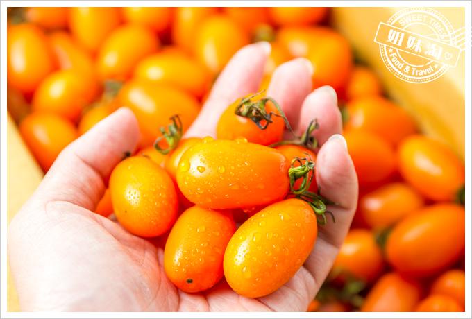 美濃澄蜜香玉女小番茄12