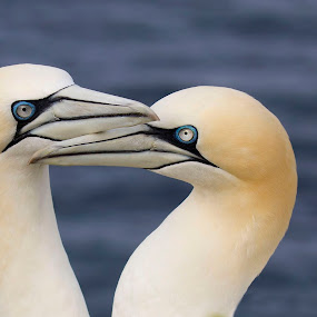 hart by Anja Voorn - Animals Birds