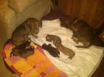 help i need puppy names photos