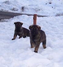 Photo: Ayla og Ailo i snøen for første gang