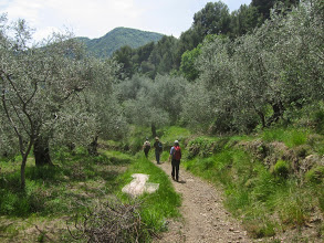 Photo: Leaving town we head through olive groves ...