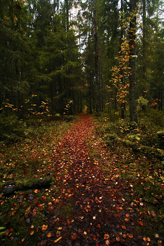 Clearpath by Juliusz Wilczynski - Landscapes Forests (  )