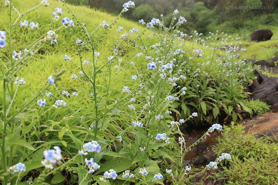 A beautiful flower plant