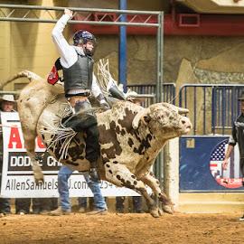 Rodeo Night by Christopher Winston - Sports & Fitness Rodeo/Bull Riding ( cowboy, bullrider, texas, sports, bull, animal )