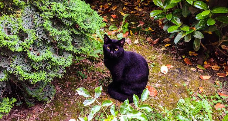 Blackcat. di M47OH