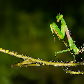 Save Greenty by Faiq Alfaizi - Animals Insects & Spiders