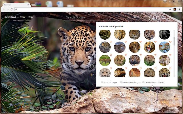 Leopard Wallpaper HD Wildcats Leopards NewTab