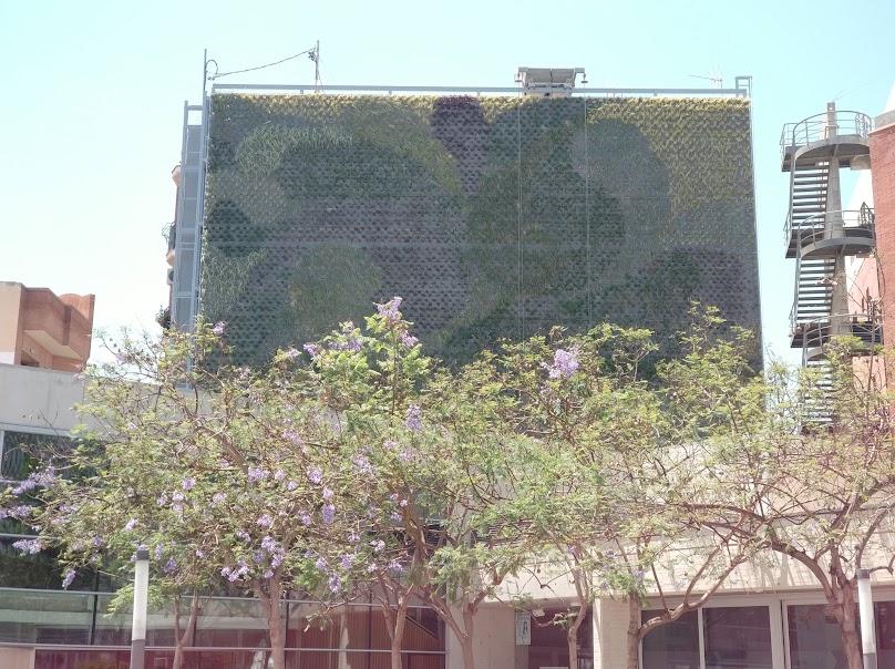 Estado actual del jardín vertical de San Vicente del Raspeig