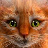My Kitten (Virtual Pet)