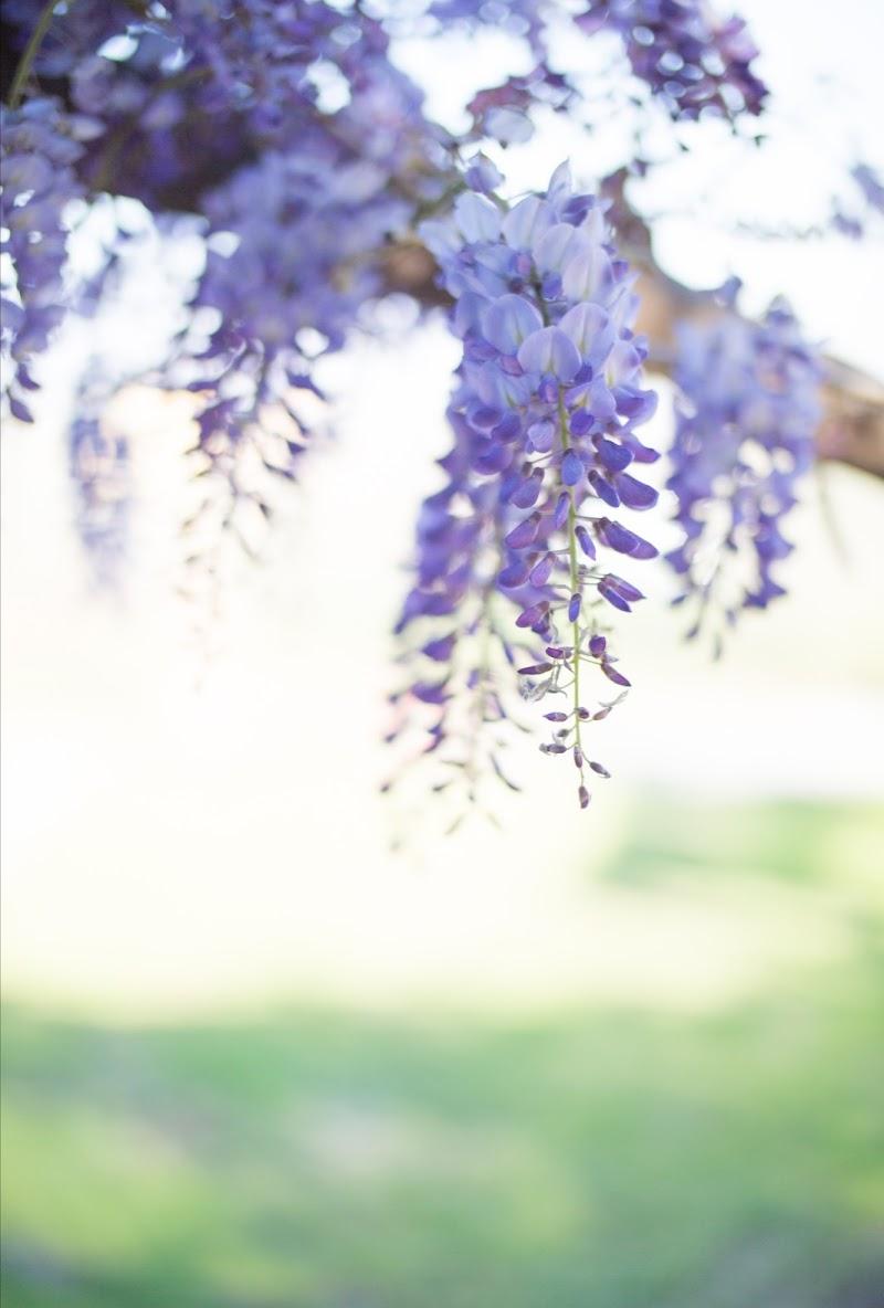 Primavera  di daniele_gagliano