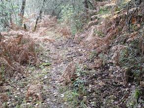Photo: como una selva, no hay que distraerse ni para mear