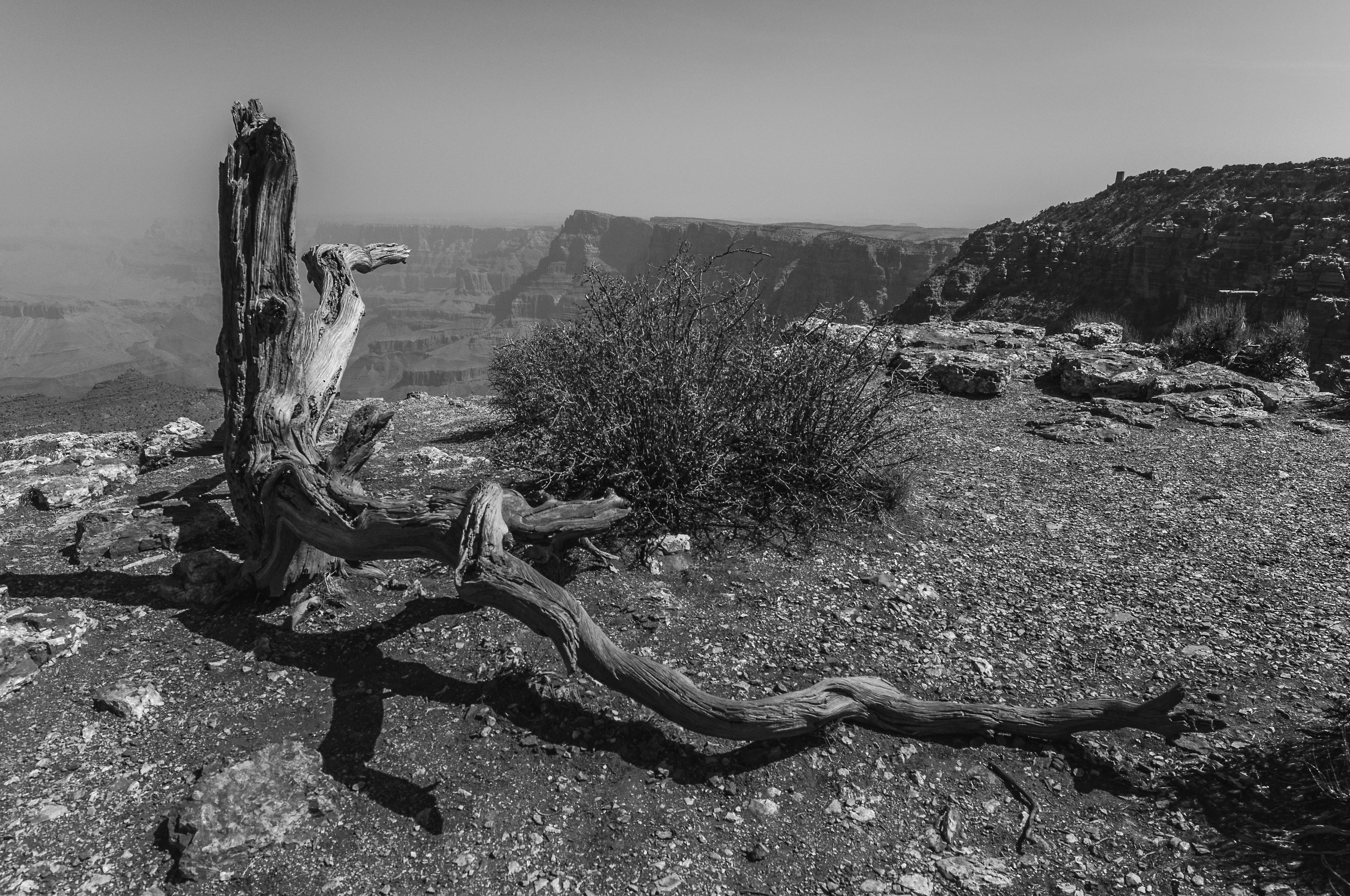 Panorama del Grand Canyon di MORAN12