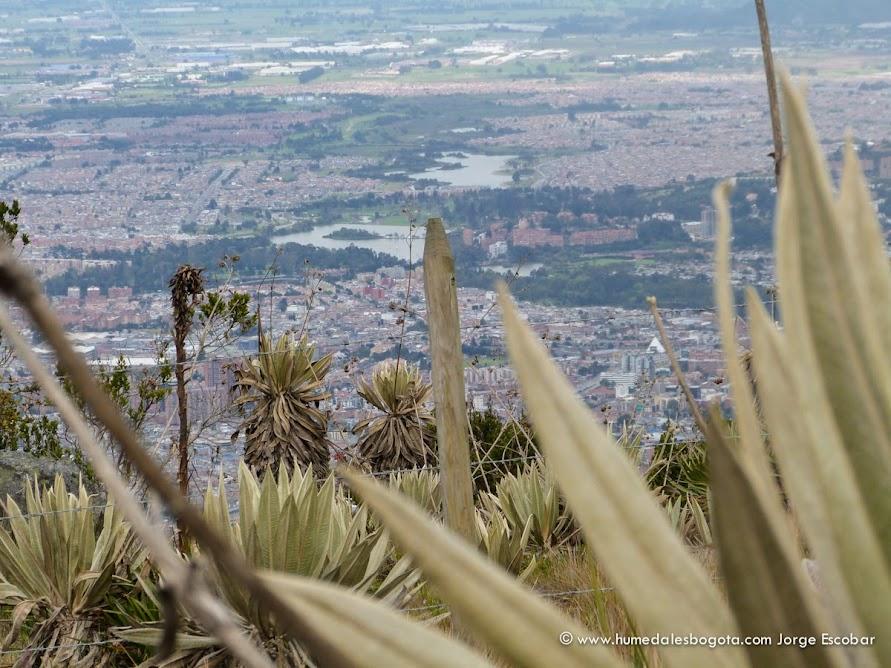 Humedales desde los cerros orientales de Bogotá