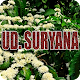 Download Suryana For PC Windows and Mac