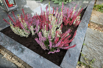 Jakie Wybrac Kwiaty I Inne Rosliny Na Cmentarz Twojogrodek Pl