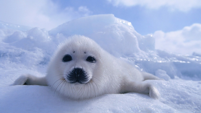 Watch Wild Arctic live