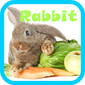 Rabbit Live wallpaper