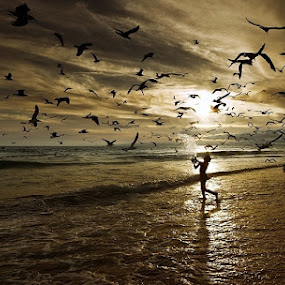 playing with birds by António Leão de Sousa - Landscapes Beaches ( animal, motion, animals in motion, pwc76, , landscape, beach, Beach, sunset, blue, water, ocean. , bird, fly, flight )