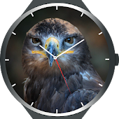 Birds Watch Faces