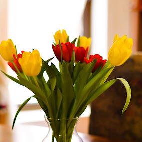 by Adela Rusu - Flowers Flower Arangements