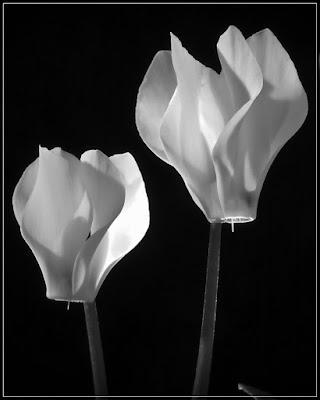Light flowers di hylablu