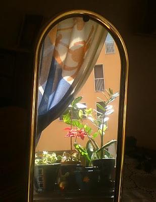 Variopinta finestra magica di MARSA