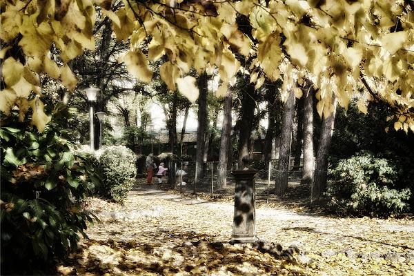il mio parco di lorenzo_davighi