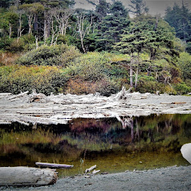 Natures Reflections  by Lavonne Ripley - Landscapes Beaches