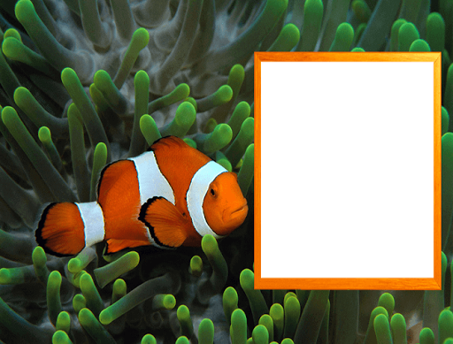 Aquarium Photo Frames