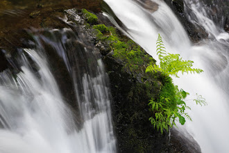 Photo: This is not my usual waterfall shot. Most of the time my goal is to capture the scene set before me and share with you the grandeur of the whole falls in all its magnificence. This time I decided to move in and capture this batch of fern that was growing in the most precarious spot in the midst of this waterfall. Despite the trials it must face during high flows it continues to grow on the perch its seed landed on. You go little fern!  #sonyalpha #waterfall  #landscapephotography  #nature