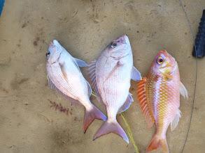 Photo: 真鯛、真鯛、タマガシラ。